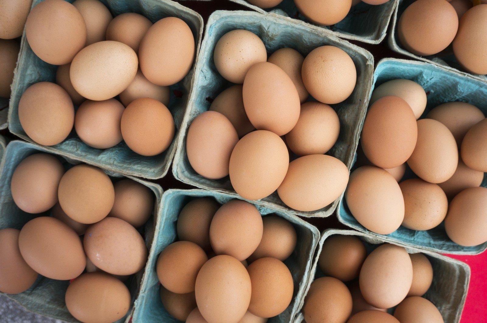 kiaušiniai kabo kai stačiai